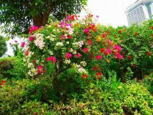 ピンクや赤や黄色の花