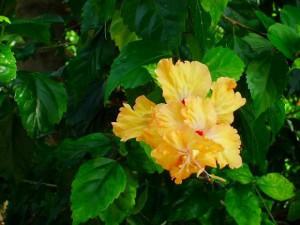 お花の写真