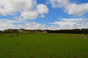 馬で行った道を、Anneと歩いてみることにしました