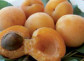 Apricots - summer